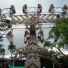 Broward County Fair in Fort Lauderdale South Florida November 15 - 25 2007