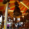 view-on-the-fair-summer-nairn-162